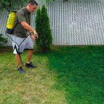 Rumput Halaman Tetap Hijau dengan Cat Khusus