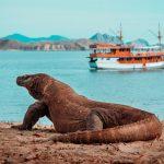 Tips Aman Liburan ke Pulau Komodo