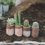 Tips dan Trik Merawat Kaktus Agar Tidak Gampang Mati