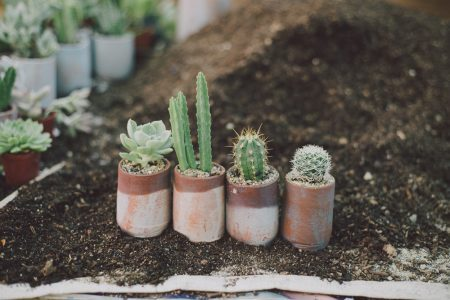Tips merawat kaktus