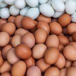 3 Manfaat Konsumsi Telur Ayam atau Bebek