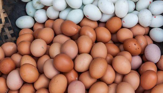 telur bebek dan telur ayam